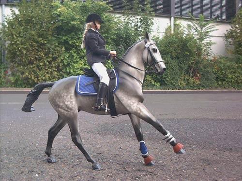 Как сделать фото с лошадью