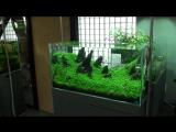 Takashi-Amanos-Gallery-in-Japan-Part-1-YouTube