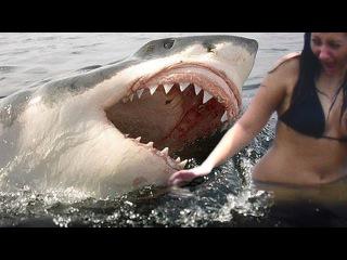 Реальная съёмка нападение акулы на человека. Акулы видео