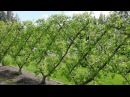Новые идеи для дачи и сада своими руками - ограждения зеленые, плетеные ..