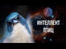 Кемеровский Лекторий Светлана Яковлева про интеллект птиц
