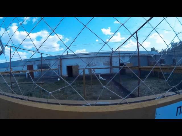 Поездка на страусиную ферму в Усть-Заостровке