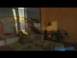 АРКАДИАС - Иллюзия любви_Новинка - YouTube_0_1465230665330