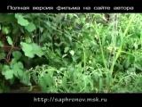 06 Огород в родовом поместье (перцы томаты)