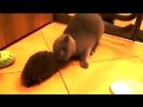 Как кот может использовать ежика)
