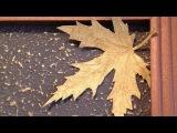 Создание кленового листа из декоративной штукатурки