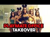 Playmates Office