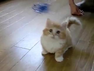 Няшный котёнок