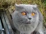 Коля-гад (Кот ругается)