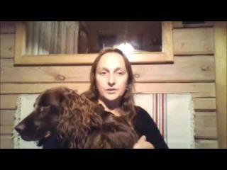 Путешествие в Финляндию и Норвегию на машине с собакой