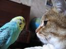 Попугай говорит с котом. Прикольное видео.