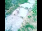 Кроша на прогулке)))