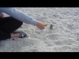 Оля кормит воробушка на пляже 2015 г.