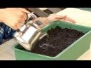 Все о выращивании капусты Посев капусты на рассаду Часть 2