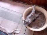 Кот очень смешно ходит в туалет