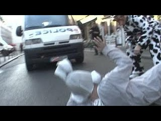 Hidden camera : Horny rabbit & cow gone mad in town !