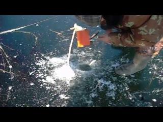 РЫБАЛКА 2015-14. РЕДКИЕ КАДРЫ. ЩУКА НА ЖЕРЛИЦЫ.Northern Pike (Animal)