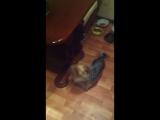 Кика охотится на муху)))