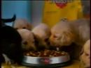 Реклама (Первый канал, 22.01.2006) Nescafe Gold, Snickers, Називин, Махеевъ, Роллтон, Ростелеком