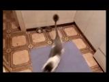 Кот сломал схему с огурцами