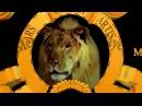 My Take on 2012 MGM Logo