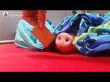 Pig vs Cookie (6 sec)