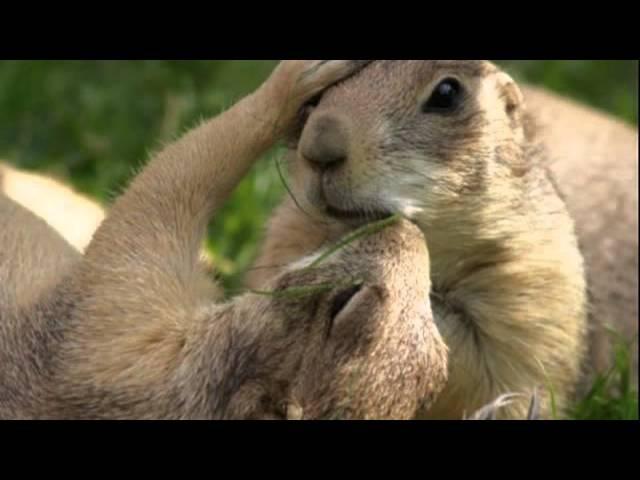 Любовь в мире животных. С днем святого Валентина!