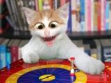 Приколы про кошек. Смешные коты. Лучшие приколы с кошками и кошками 2016