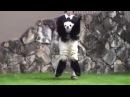 Hayvanat Bahçesi Çalışanlarına Ecel Terleri Döktüren Dünyanın En Minnoş Pandası