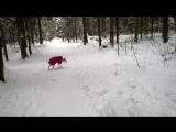 Викинг играет в зимнем лесу/26.02.2016 г./