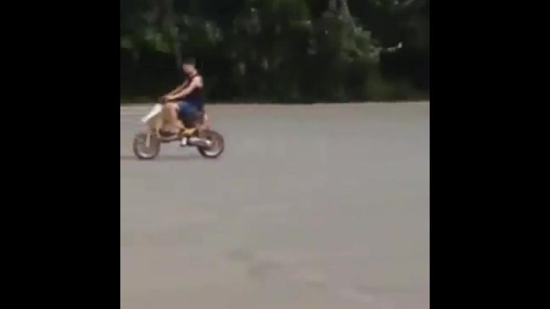 Hot Wheels скорость это жизнь