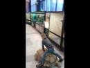 Покатай меня...большая черепаха....Было весело:-))
