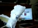 Death Metal Parrot