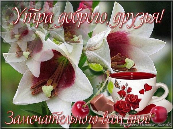 http://cs631324.vk.me/v631324923/344a3/c_PSQNIRWvQ.jpg