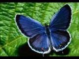 VALSUL FLUTURILOR, butterfly waltz - Tamalo - Stamatis Spanoudakis