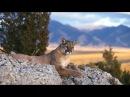 Дикая природа Животные Северной Америки Документальный фильм National Geographic