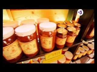 Вокруг света.Места силы.Мёд в Израиле (2)