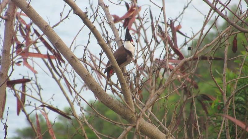 Пение птиц в парке возле Стэнли (Гонконг)