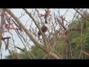 Пение птиц в парке возле Стэнли Гонконг