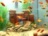 Декорации для аквариума из глины