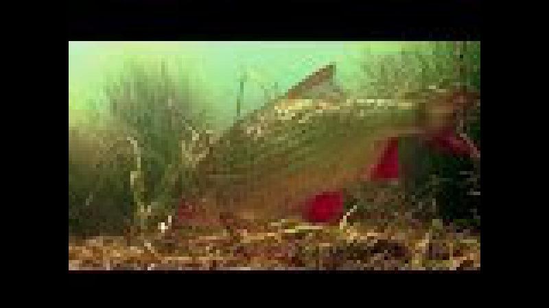 Winter fishing wt Mormyshka for roach, rudd perch. Зимная рыбалка на мормышку подводная съёмка.