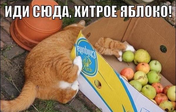 http://cs631326.vk.me/v631326194/12dc3/A9kPJBMprpI.jpg