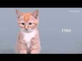 100 лет красоты кошек за одну минуту