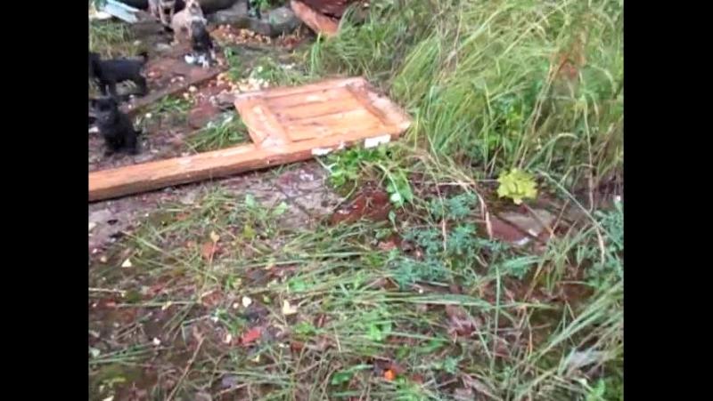 охранник фабрики отравил собаку, остались 7 сиротинок.