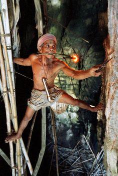 лазание по бамбуковым палкам в пещере Мадаи (Малайское Борнео)