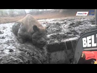 WATCH: Incredible moment digger frees black rhino from mud in KZN