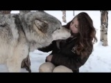 Colorado Wolf and peoples Wildlife Center