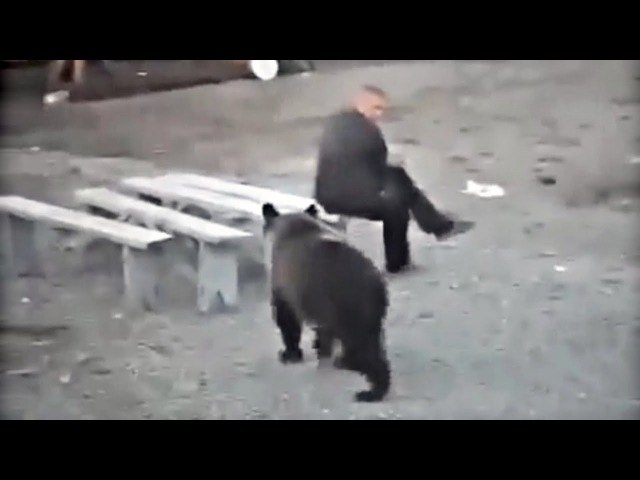 Man vs Bear Compilation ★ Crazy Close Call Videos ★ FailCity 2016