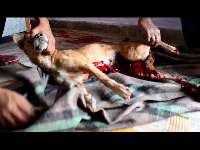 Спасение собаки, истекающей кровью