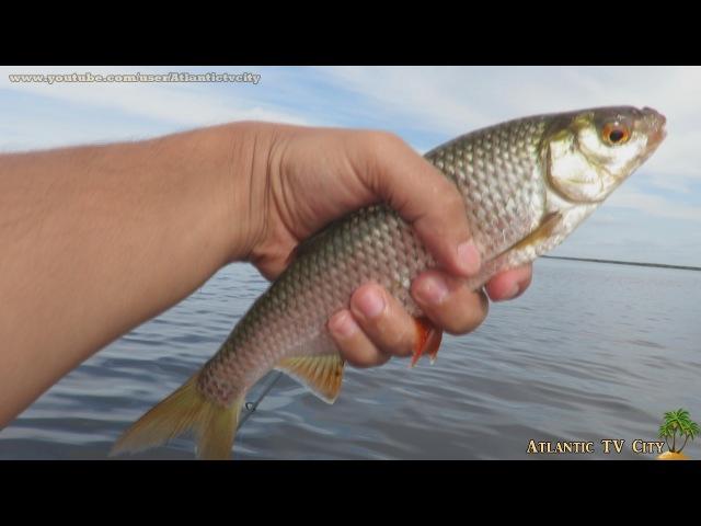 Рыбалка на Ладоге Креницы Ловим плотву окуня и щуку на реке Волхов